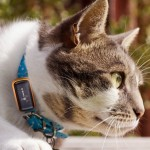 Tudod hol jár a macskád?